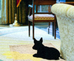 White House First Dog Barney reclining on soiled U.S. Constitution, Oval Office: Video still